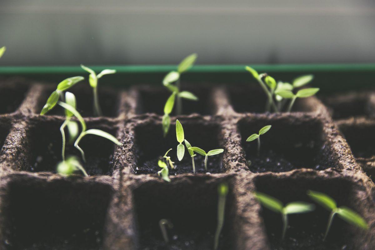 Permis de végétaliser : quand la ville se met au vert