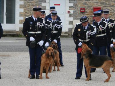 Des chiens de Saint Hubert operationnels à la gendarmerie en France et leur maître