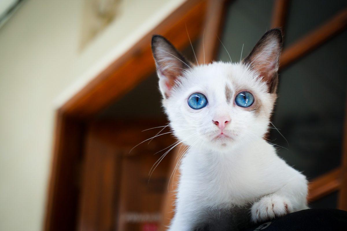 Animaux en ville : chat déborde !