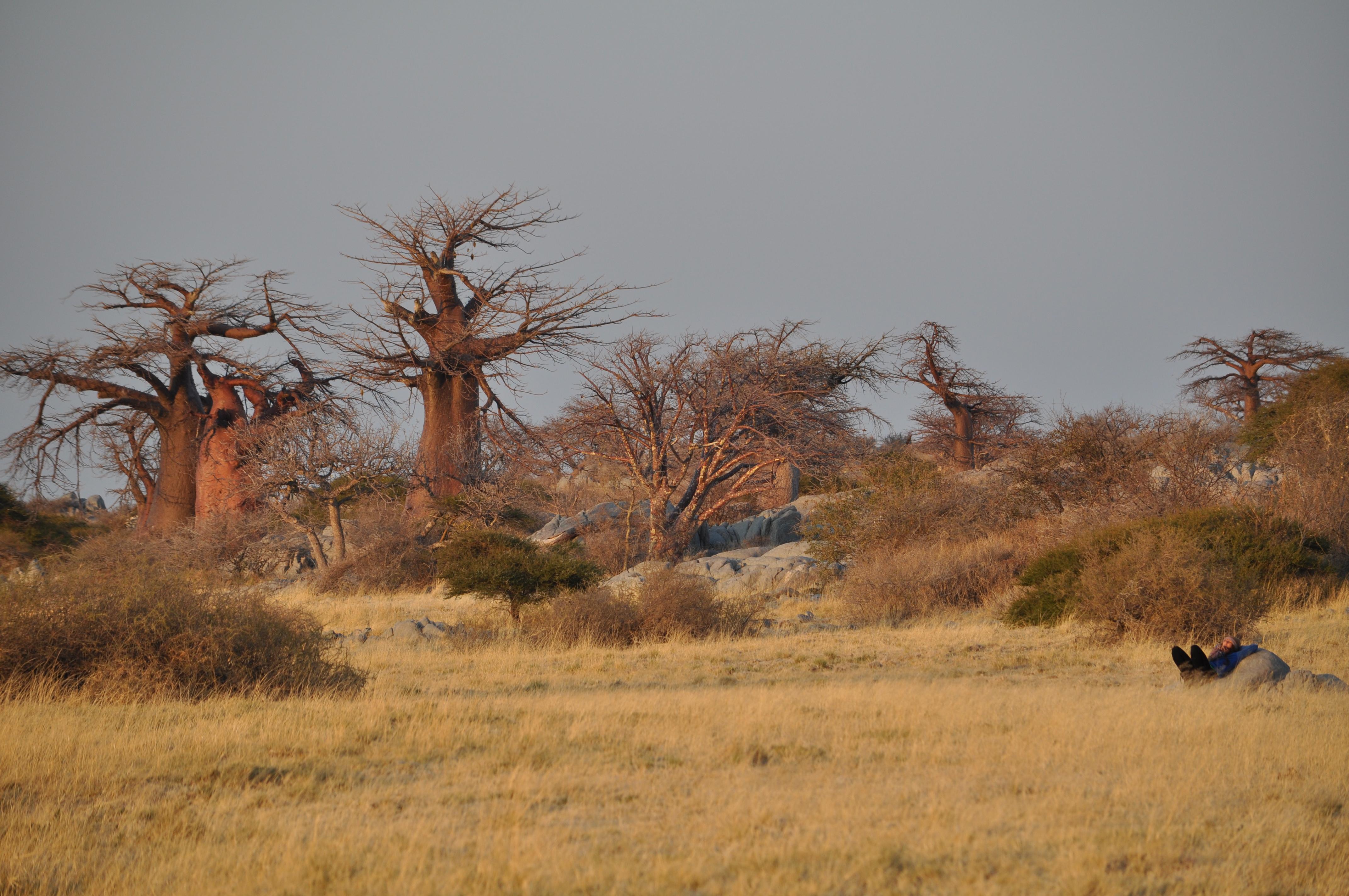 "Lara-Scarlett Gervais au Bostwana à Kubu Island, ""l'île de son Baobab"""