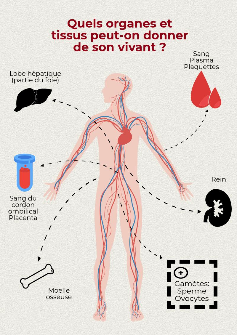 schéma des organes que l'on peut donner