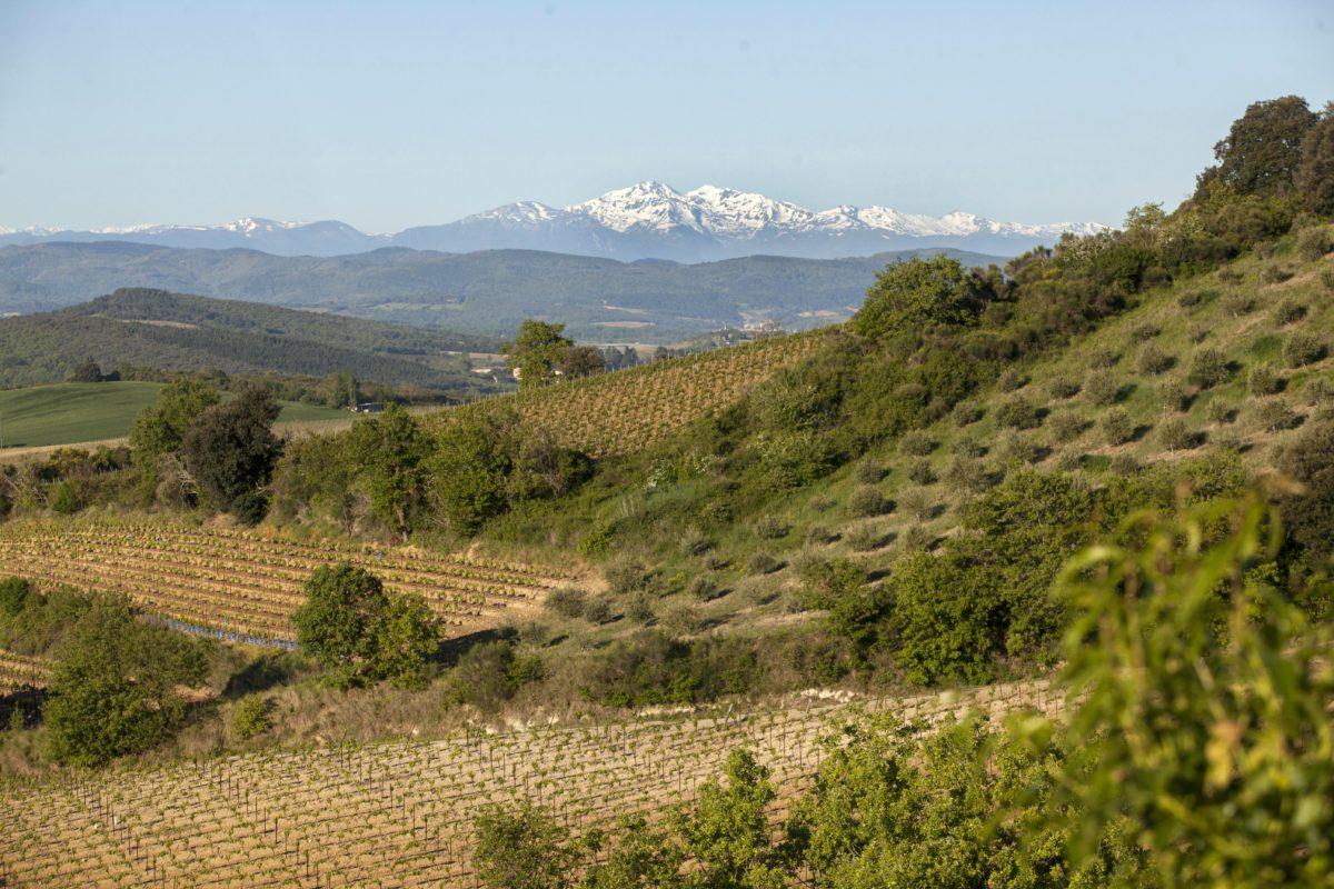 Les vins effervescents : un marché en pleine ébullition