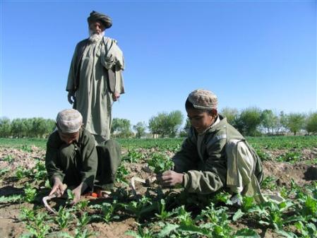 Afghanistan-Pavot.jpg