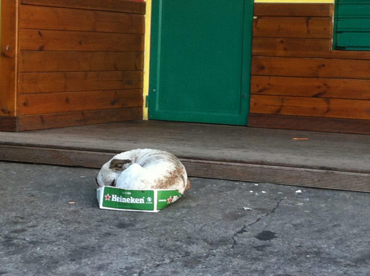 Maltraitance animale sur l'île de la Réunion : un fléau ignoré des pouvoirs publics