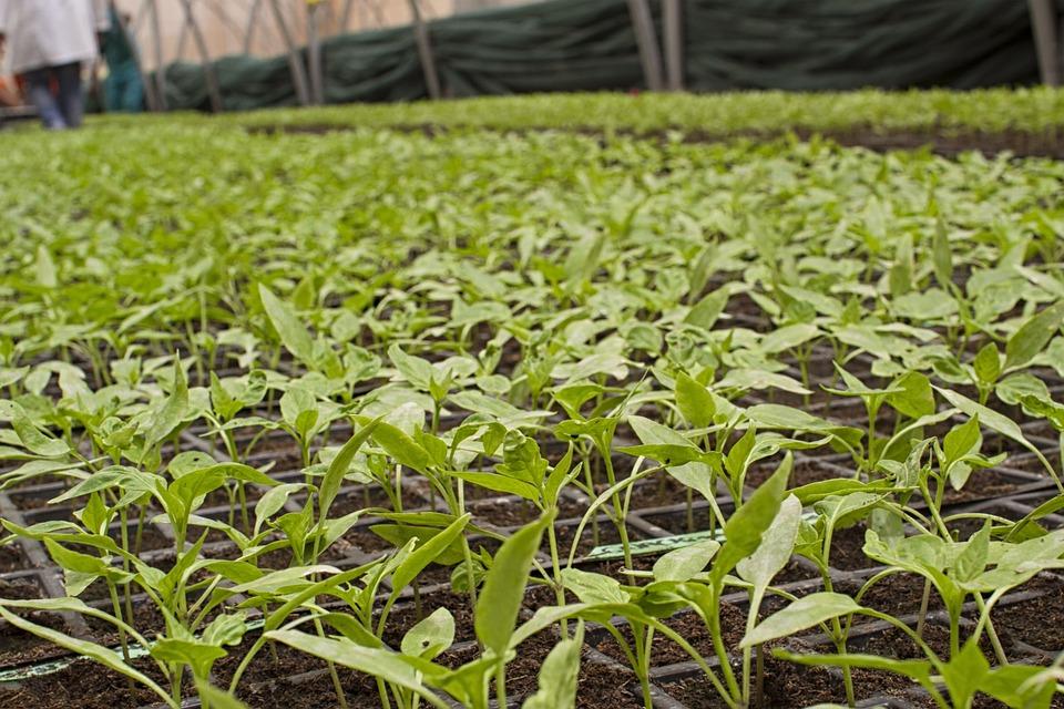 Agriculture biologique : le recul de l'État