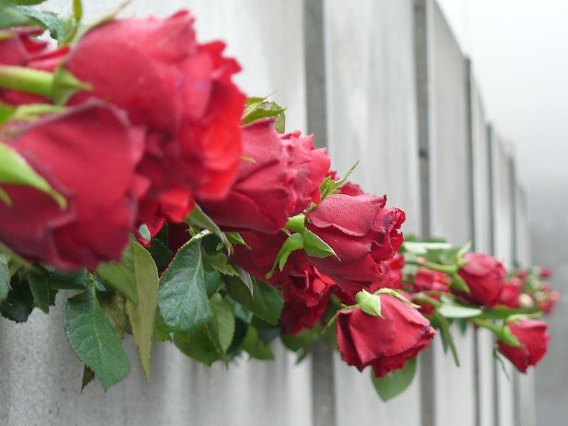 A Bernauer Strasse, une commémoration placée sous le signe de l'émotion et du souvenir