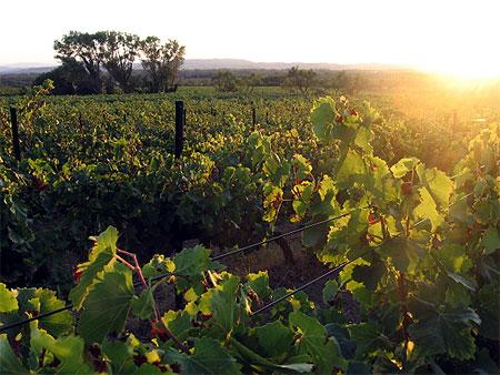 La Sixième Fête des Vignes, le cache-misère
